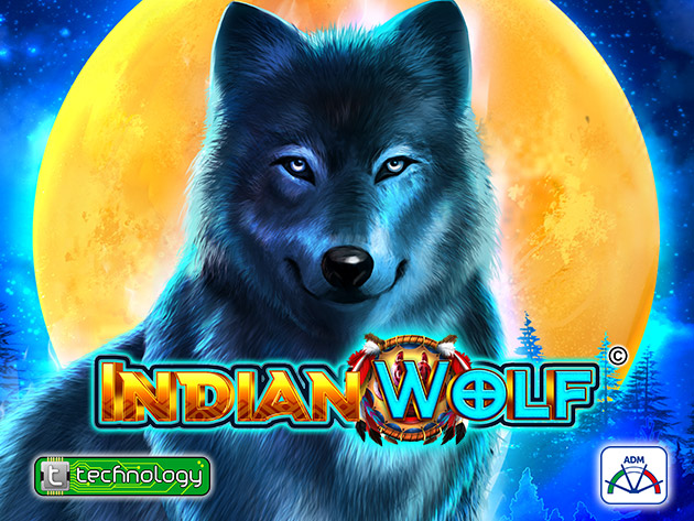 Indian Wolf 1